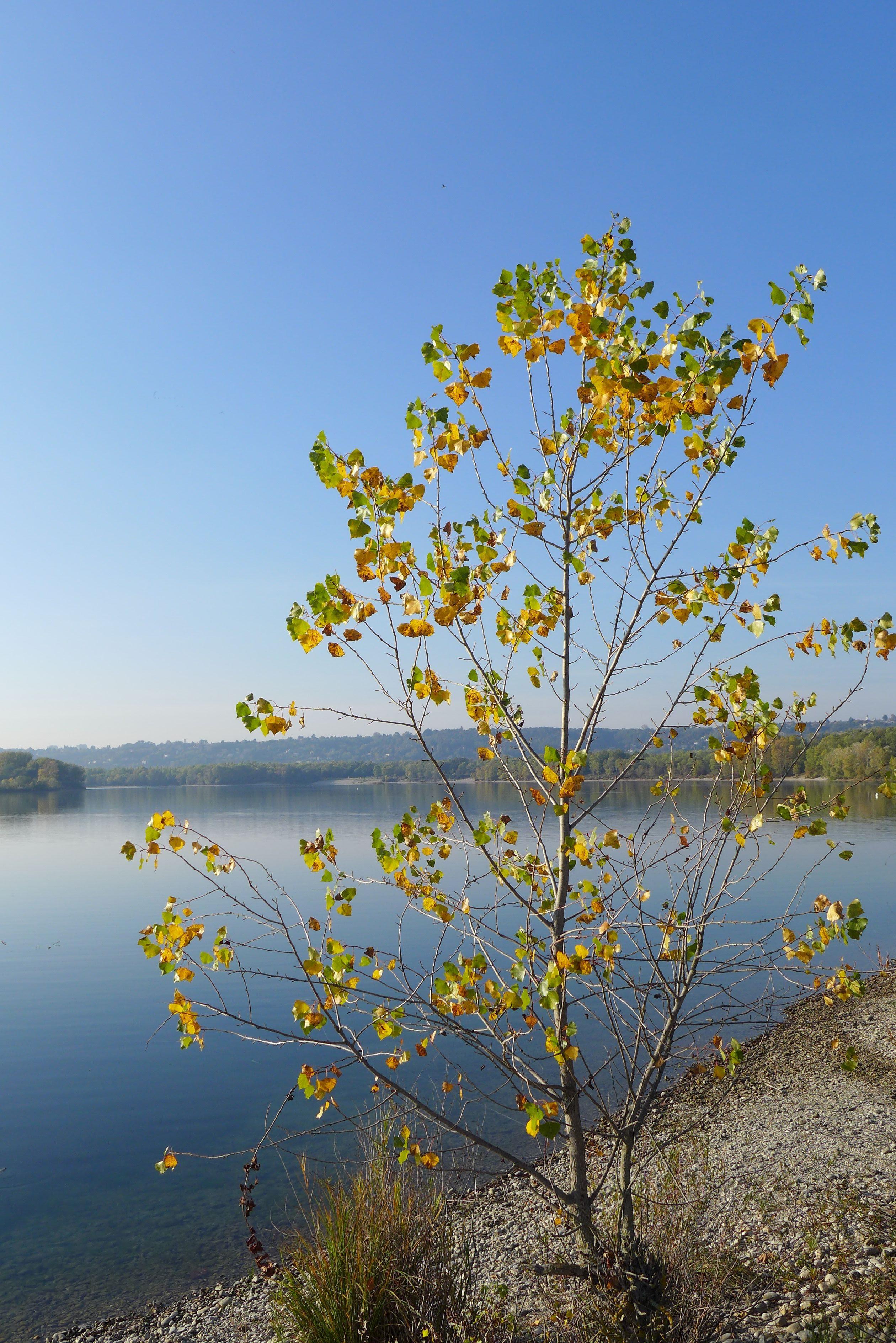 Feuilles automne Miribel, région de Lyon