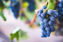 vins, beaujolais nouveau