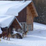 Ski, Sports hiver, Neige, Auvergne Rhône-Alpes, Chiens traîneaux