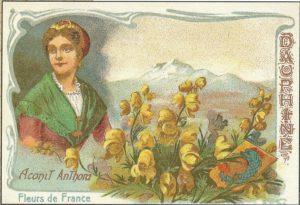 Fleurs-Dauphiné,Senteurs-Montagnes, senteurs-alpines,tourisme-expérientiel