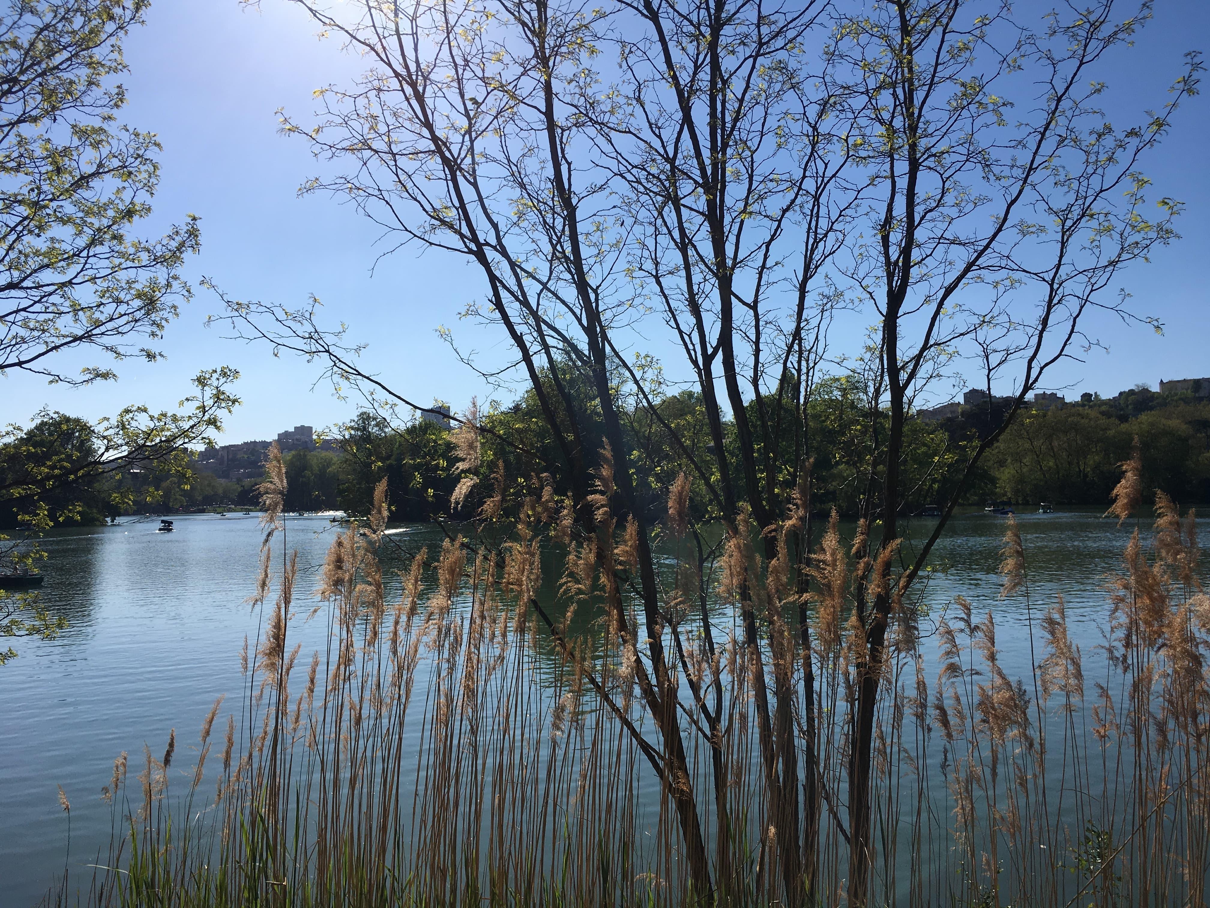 saison, automne, arbres, parc,