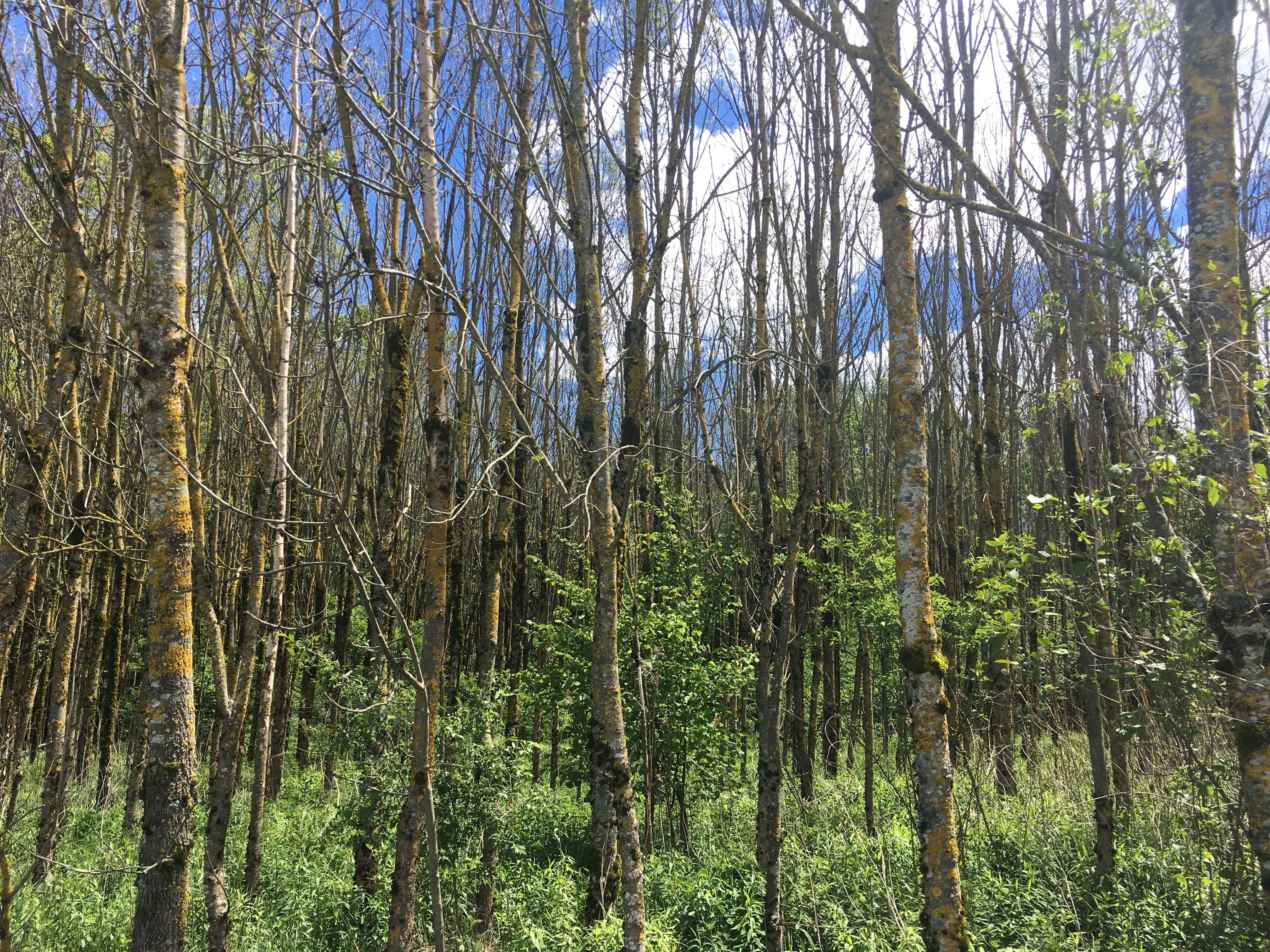 saison, automne, forêt, herbe, bois,