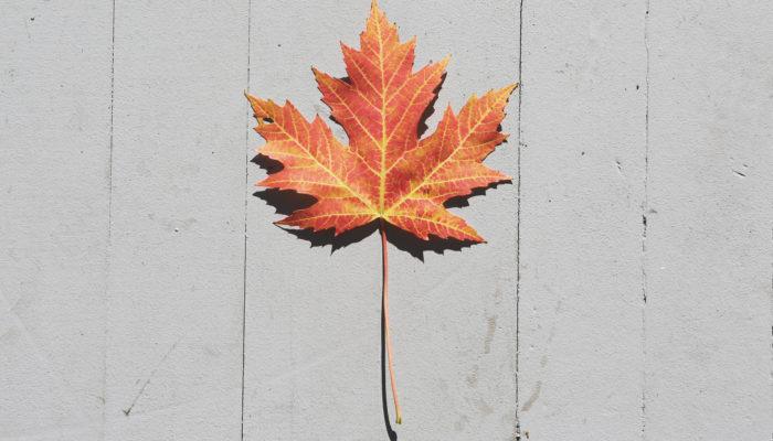 automne, feuille, saison,