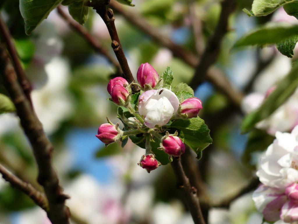 Fleurs du Verger OlfaPhily